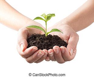 pianta, -, sfondo bianco, mani