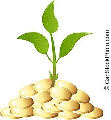 pianta soldi, verde, giovane