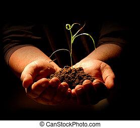 pianta, tenere mani