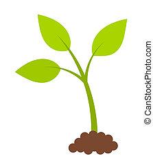 pianta, verde, giovane
