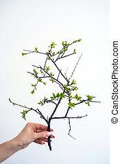 pianta, verde, tenendo mano