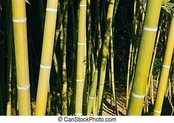 piantagione, bambù, canna, verde