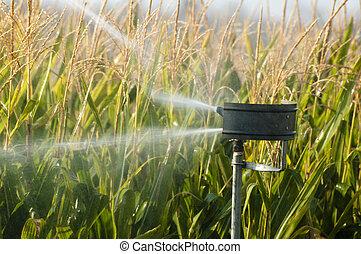 piantagione, granaglie, irrigazione