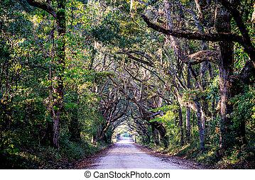 piantagione, paese, quercia, strada, albero
