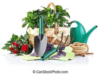 piante, apparecchiatura, fiori, verde, giardino