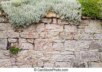 piante, parete, vecchio, medievale, coperto