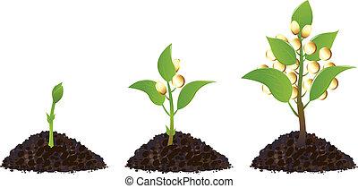 piante, soldi, vita, processo
