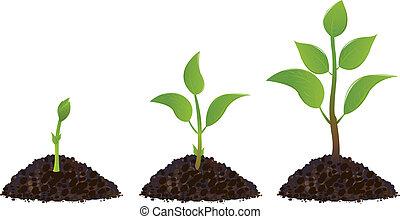 piante, verde, giovane
