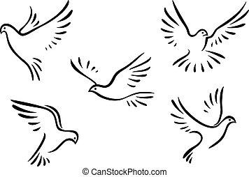 piccioni, set, colombe