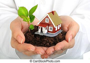 piccola casa, pianta, hands.