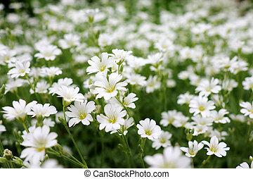 piccolo, fiori, sfondo verde