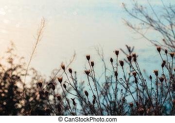 piccolo, luce, pianta, fiori, fondo