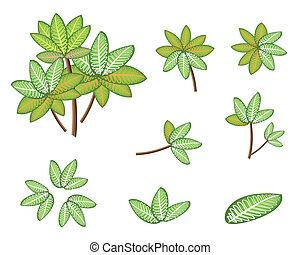 picta, isometrico, set, marianne, pianta, dieffenbachia