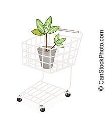 picta, pianta, shopping, marianne, carrello, dieffenbachia