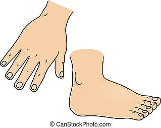 piede, parti corpo, mano