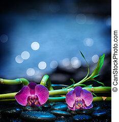 pietra, fondo, orchidee