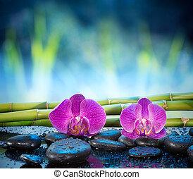 pietra, fondo, orchidee, bambù