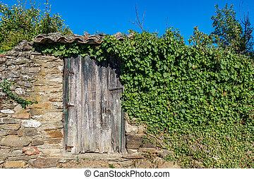 pietra, porta, legno, vendemmia, sopra, parete, edera