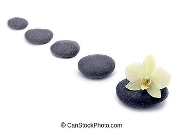 pietre, fiore, isolated., zen, fondo, terme, orchidee