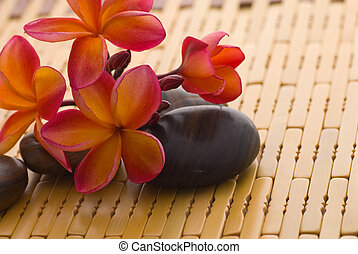 pietre, frangipani