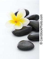 pietre, frangipani, sfondo bianco, terme