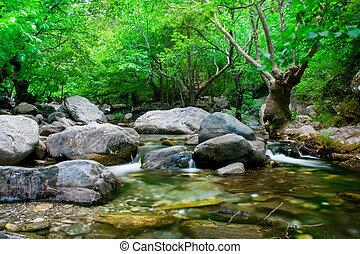 pietre, grigio, albero, flusso