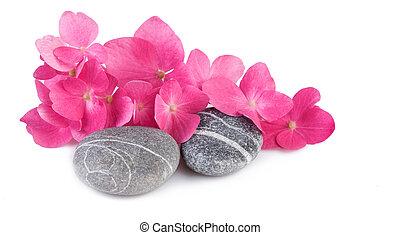 pietre, sfondo rosa, terme, fiori bianchi