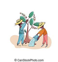 plantation., caffè, coltivatori, vettore, illustration., cutie, uomini, raccogliere, characters., cartone animato, acqua, alberi.