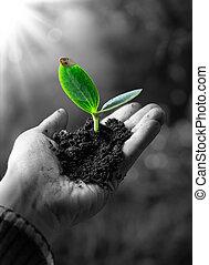 poco, agricolture, concetto, pianta