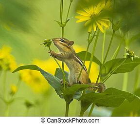 poco, amante natura
