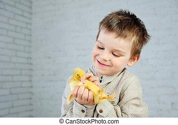 poco, anatroccolo, giallo, neonato, ragazzo, fondo, mani, bianco