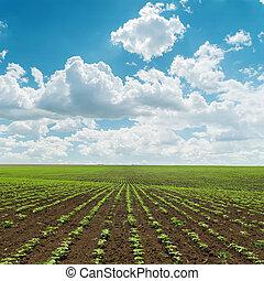 poco, cielo, nuvoloso, campo, verde, colpi, sotto, agricoltura