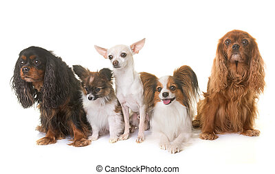 poco, gruppo, cani