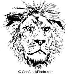 poco, leone, criniera
