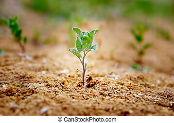 poco, pianta verde
