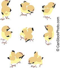 poco, pollo, illustrazione