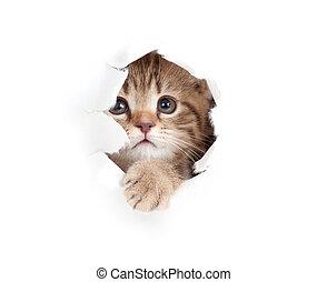 poco, su, strappato, isolato, gatto, dall'aspetto, carta, buco, lato