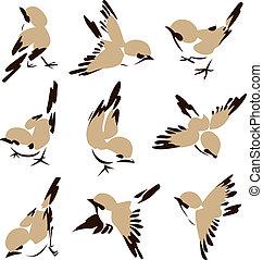 poco, uccello, illustrazione