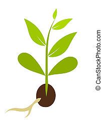 poco, vettore, morphology., -, pianta, illustrazione, seme, crescente