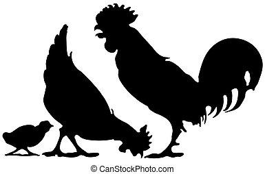 pollo, famiglia