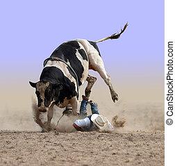 polvere, morsi, cowboy