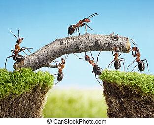ponte, lavoro squadra, costruire, formiche, squadra
