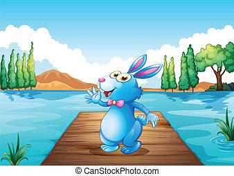 ponte legno, fiume, coniglietto, sopra