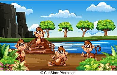 ponte, legno, scimmie, appendere, cartone animato, fuori