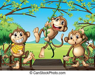 ponte legno, tre, scimmie