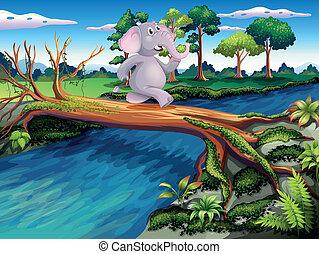 ponticello incrocio, albero, elefante
