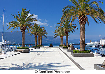 porto, montenegro, soleggiato, albero, palma, marina, giorno