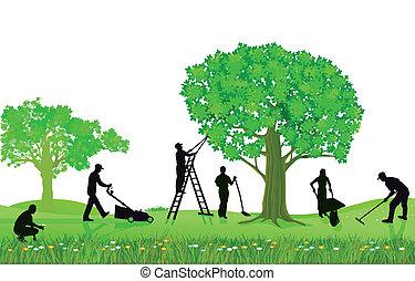 potatura, giardinaggio, piante