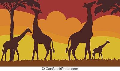prateria, silhouette, pieno, famiglia, multicolor, cornice, giraffe, fondo.