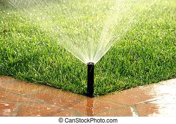 prato, giardino, irrigazione, sistema irrigazione, automatico